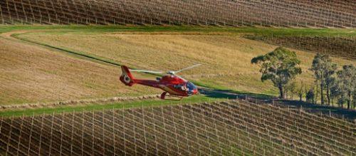 Helicopter over Yering Station Vineyard, Yarra Valley